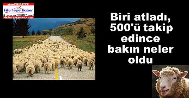 YORUMSUZ !!! ''Van'da 500 koyun neden intihar etti?''