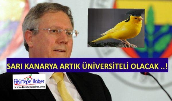Sarı kanarya artık üniversiteli olacak ..!