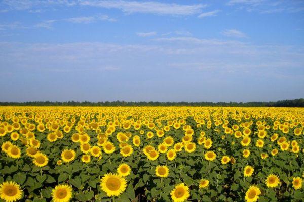 Tarımsal arazilerin mülkiyet ve kullanım devri hakkında yeni bir yönetmelik